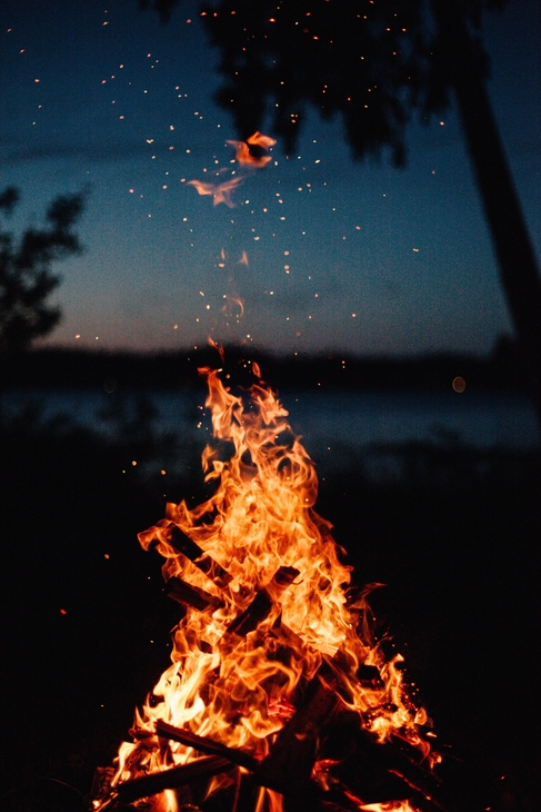 Fire burning in a forest clearing