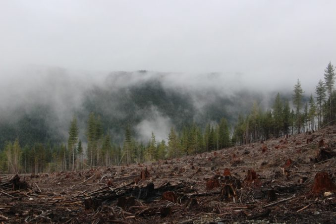A destroyed forest